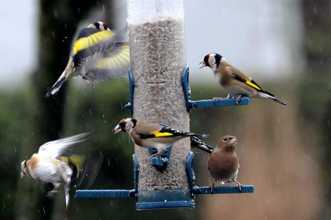 busy feeder in rain