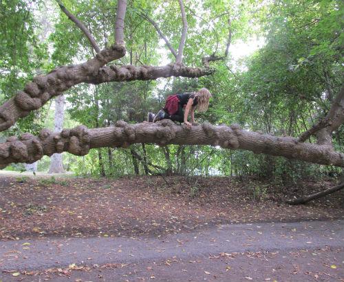 Ambrosia and tree
