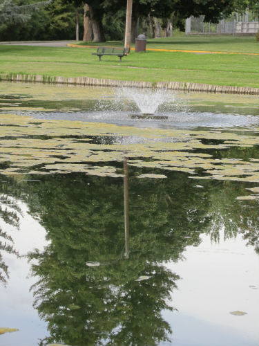 pond with tree reflection
