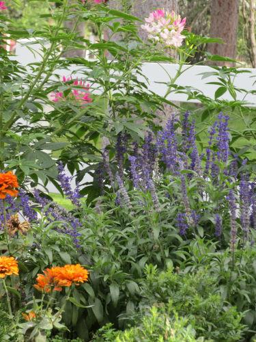 Woodland park flowers